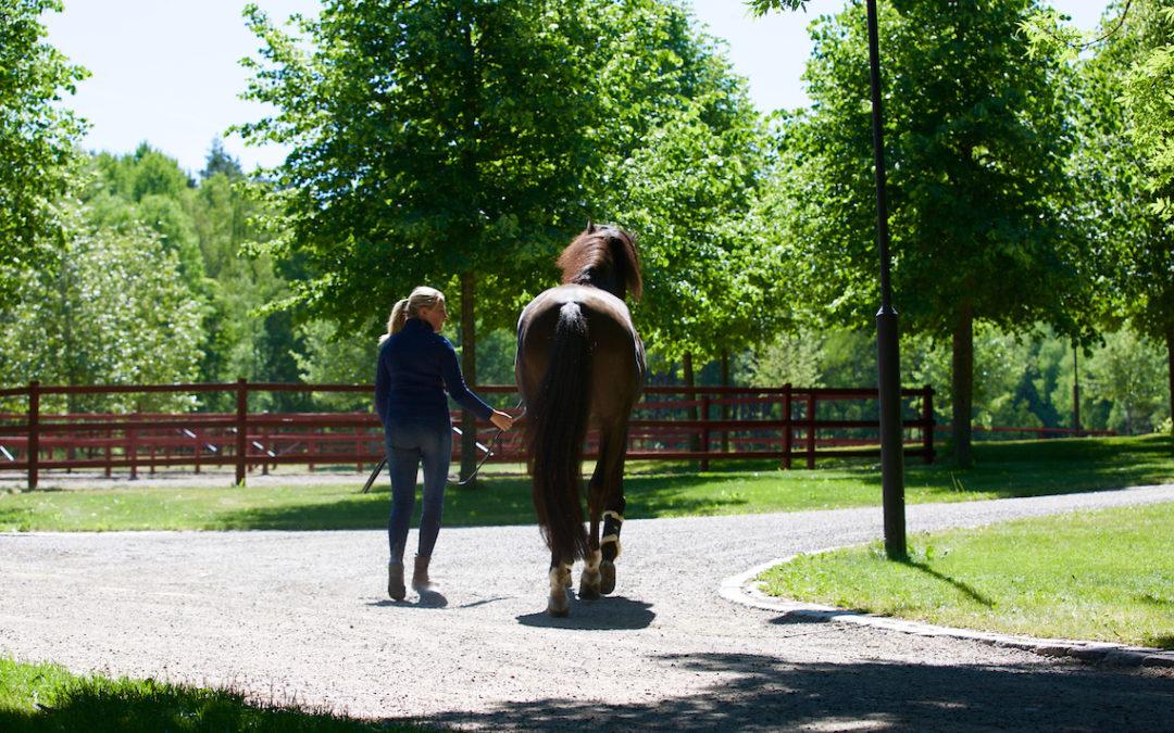 Evenemangets partner Lövsta Future Challenge fortsätter att vara hästsektorns ledande hållbarhetsaktör